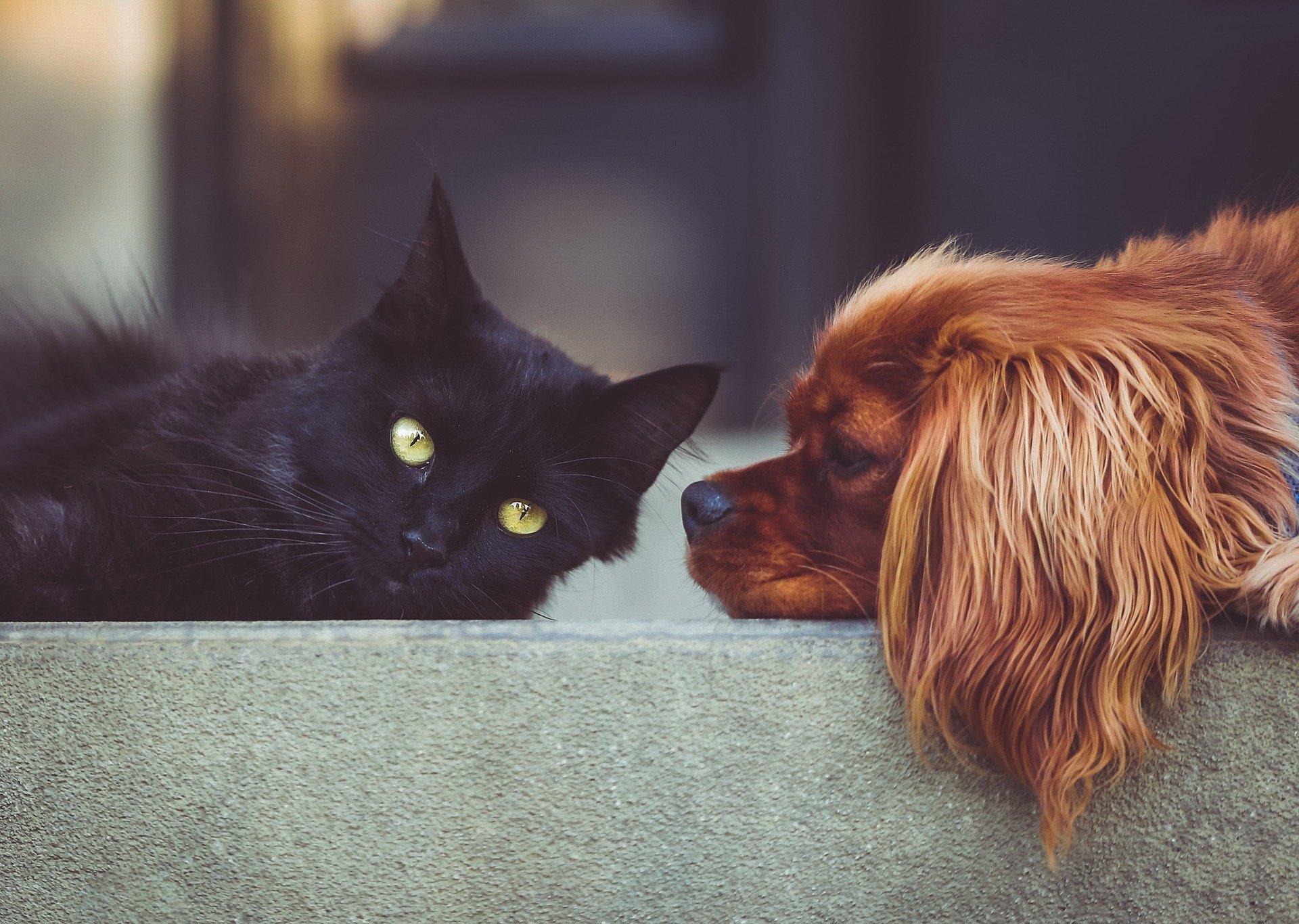 Mít domácího mazlíčka neznamená je nerušené hraní si s ním, společné ležení u televize a procházky. Znamená to i starosti spojené s péčí o naše čtyřnohé kamarády, nevyhnutelné línání či zápach nesoucí se z přítomnosti kočky v našem domově. Jak proti těmto nepříjemnostem bojovat?