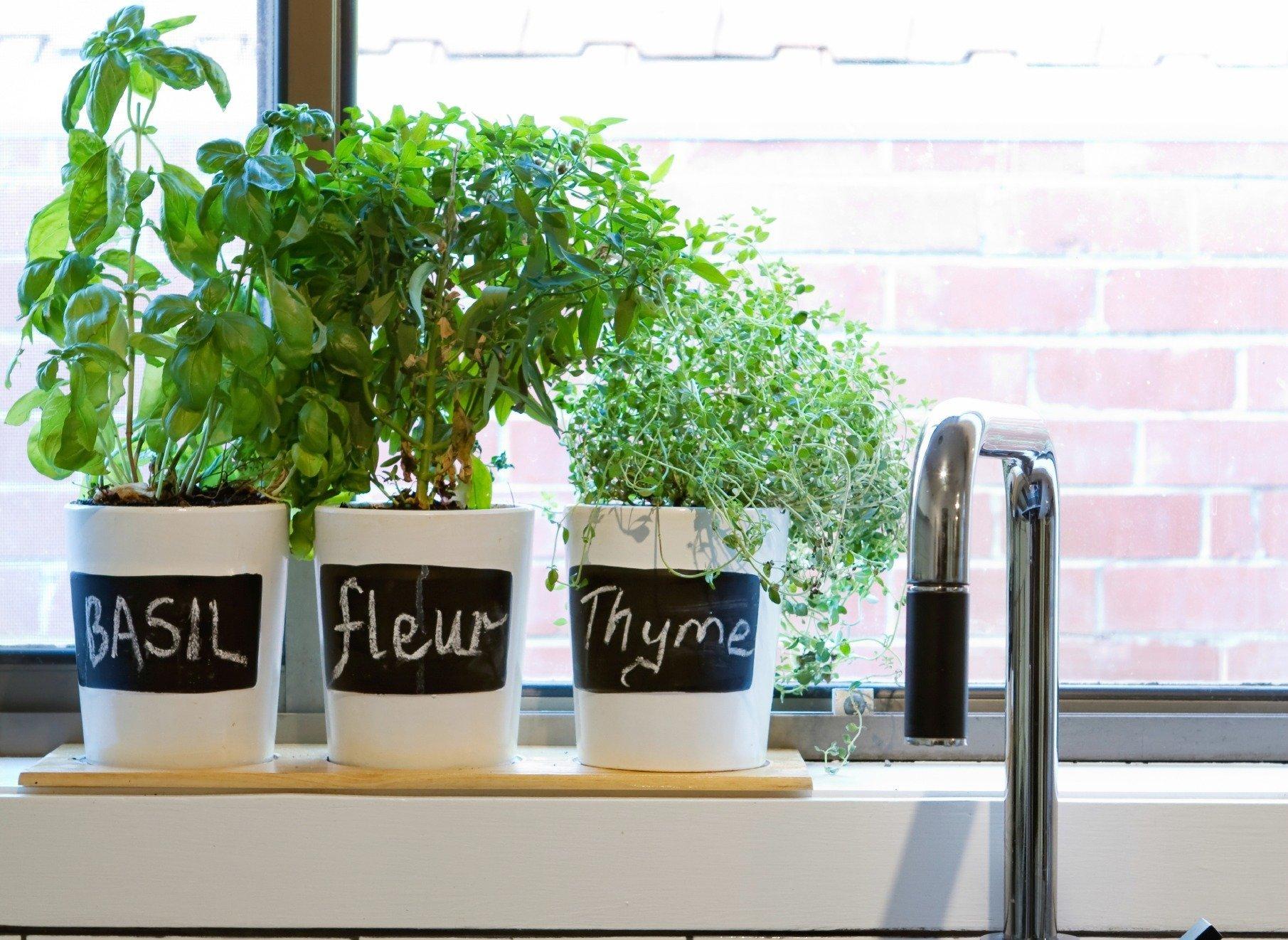 Méně zdatní pěstitelé ocení, když jim jednotlivé bylinky popíšete.