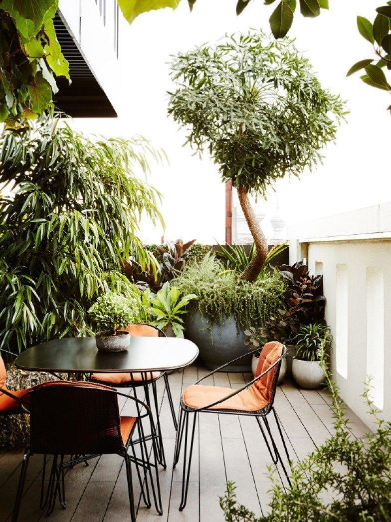 Africký strom je chloubou zahrady.