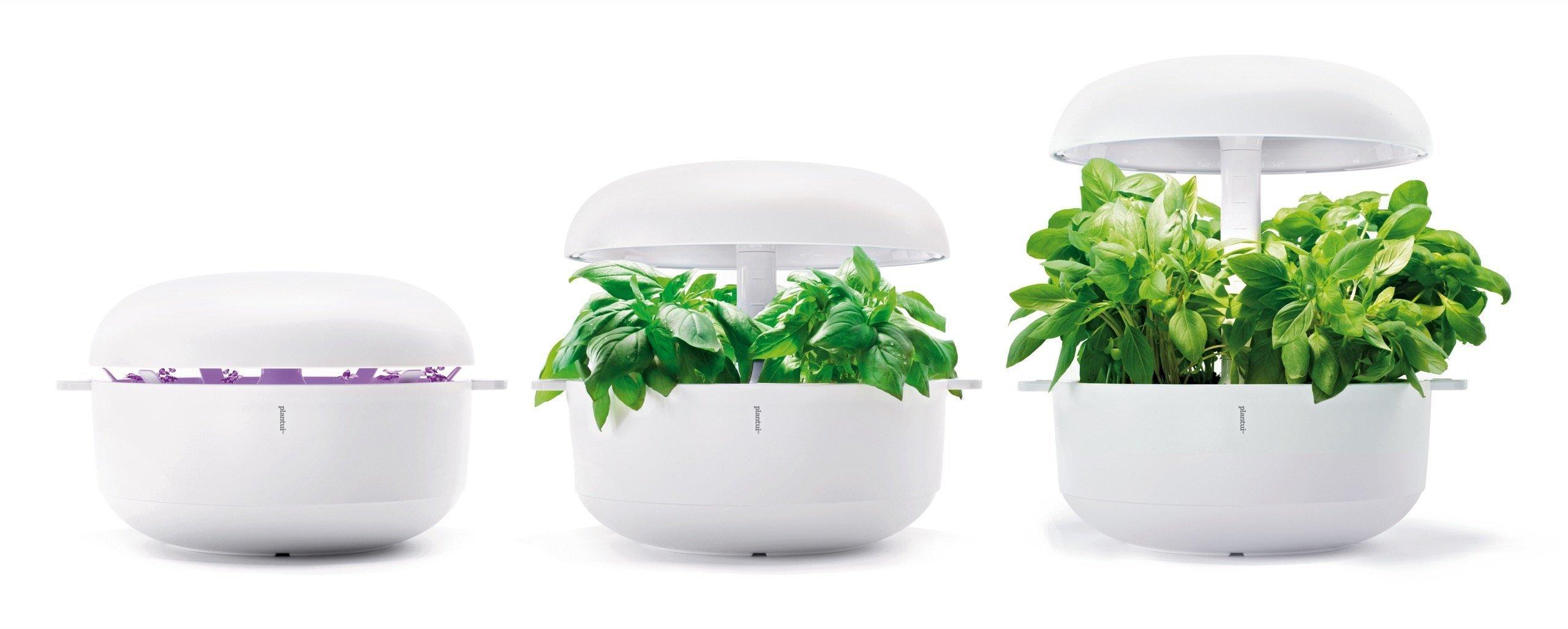 Jedním z velmi populárních trendů v oblasti pěstování rostlin v bytě, v domě nebo na terase jsou hydroponické zahrádky, které jsou jak praktické tak designové.