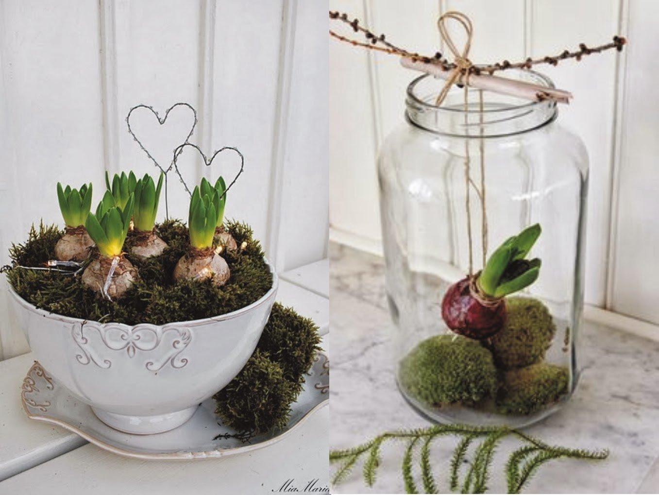 Hyacint jako krásná dekorace