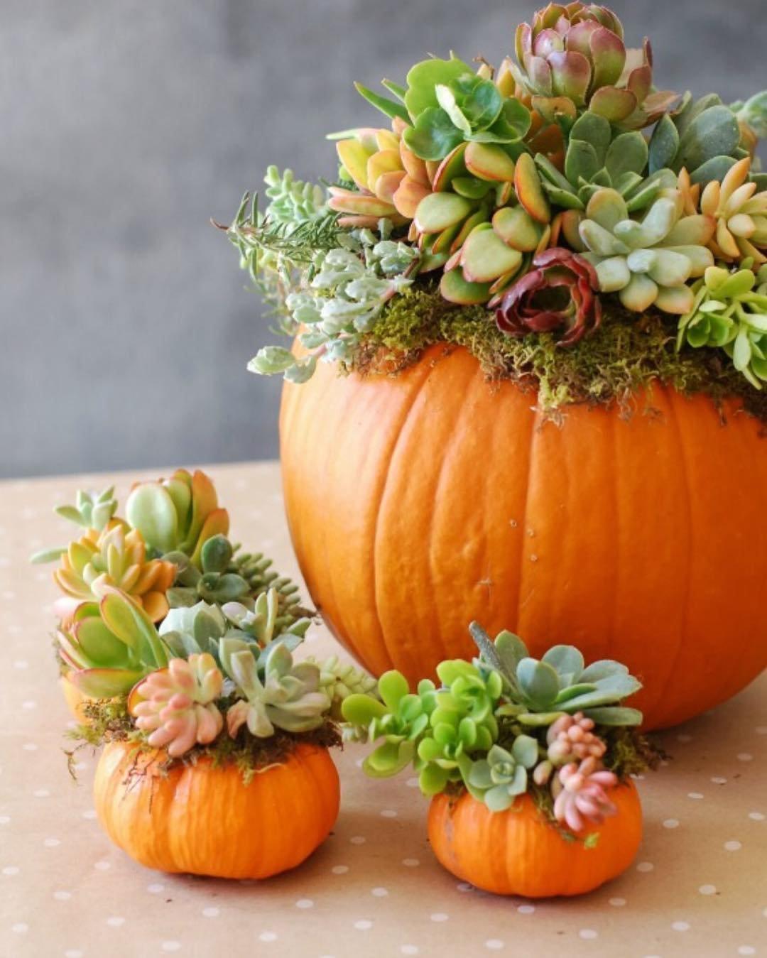 Vedle kouzelně zbarveného listí a sametových kaštanů patří k symbolům podzimu také dýně, která k nám zavítala spolu s čím dál tím oblíbenějším Halloweenem. Nejenže skvěle chutná, ale také krásně vypadá. Vytvořit si z ní tak můžeme celou řadu podzimních dekorací.