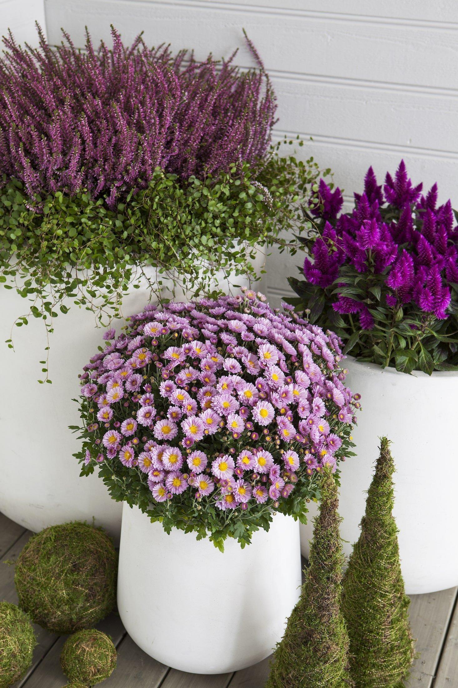 Barevné truhlíky plné mrazuvzdorných rostlin