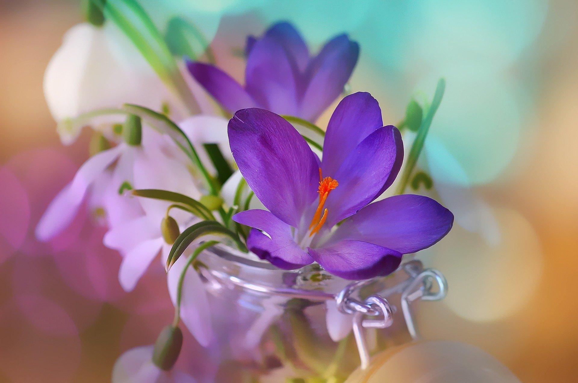 Vánoce – období klidu, zimy a sněhu. Jde o velmi kouzelné období, avšak občas se může stát, že se nám zasteskne po jaru plném zeleně. Proto se obklopujeme alespoň živými květy. Jak postupovat při rychlení květů, abychom si je mohli užívat již v zimě?