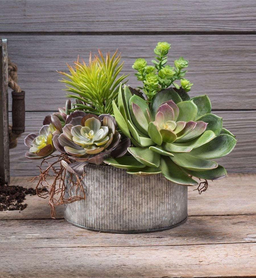 Sukulenty jsou ty pravé rostliny pro všechny, kdo nemají čas nebo vlohy k pěstování tradičních pokojových rostlin. Za naprosto minimální péči vás odmění zajímavými tvary, barevnými květy i exotickou atmosférou.