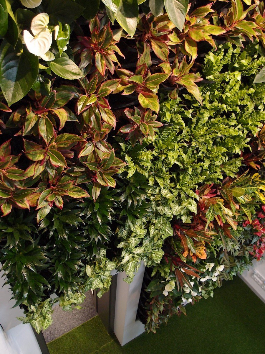 Tato vertikální zahrada je osázena 11-ti druhy rostlin v počtu 234 kusů.