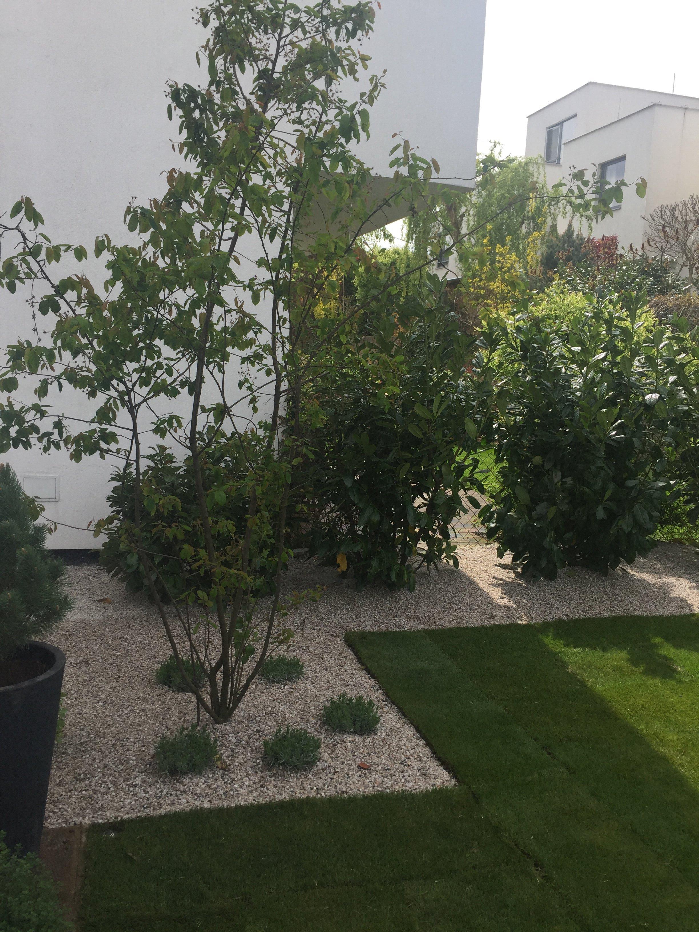 Mala moderni zahrada