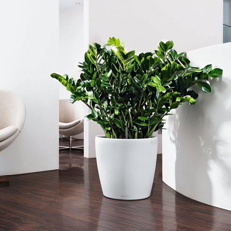 Rostliny nám do bydlení přinášejí spoustu pozitivního. Jsou krásné, vznešené, dokreslují interiér, ale hlavně, čistí vzduch. Proč je dobré mít zeleň v bytě, jak se o ni starat a kde rostliny umístit, si dnes spolu povíme.
