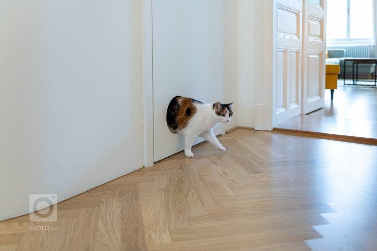 Tady bydlí kočky