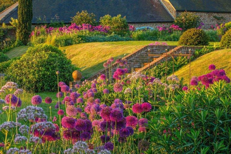 Okrasný česnek jako ozdoba vaší zahrady
