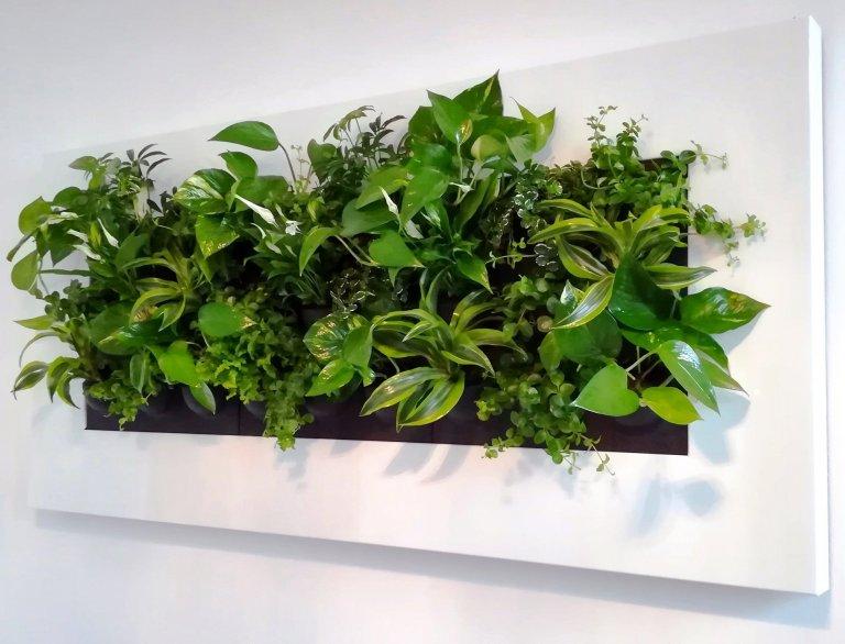 Zelené stěny (vertikální zahrady)