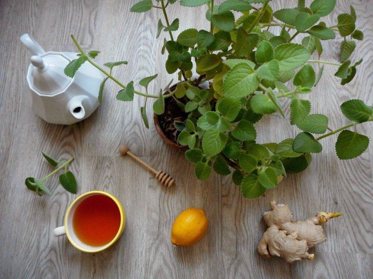Rýmovník a angínovník – domácí lékárna v květináčích