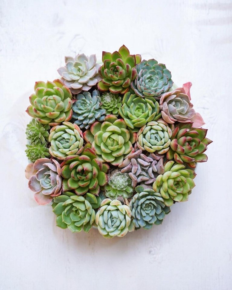 Sukulenty - nádherné, nenáročné a téměř nesmrtelné rostlinky. Můžeme si je zasadit na zahrádku, nebo je si je vzít domů jako stylovou dekoraci. Takový doplněk vás jen tak neomrzí!