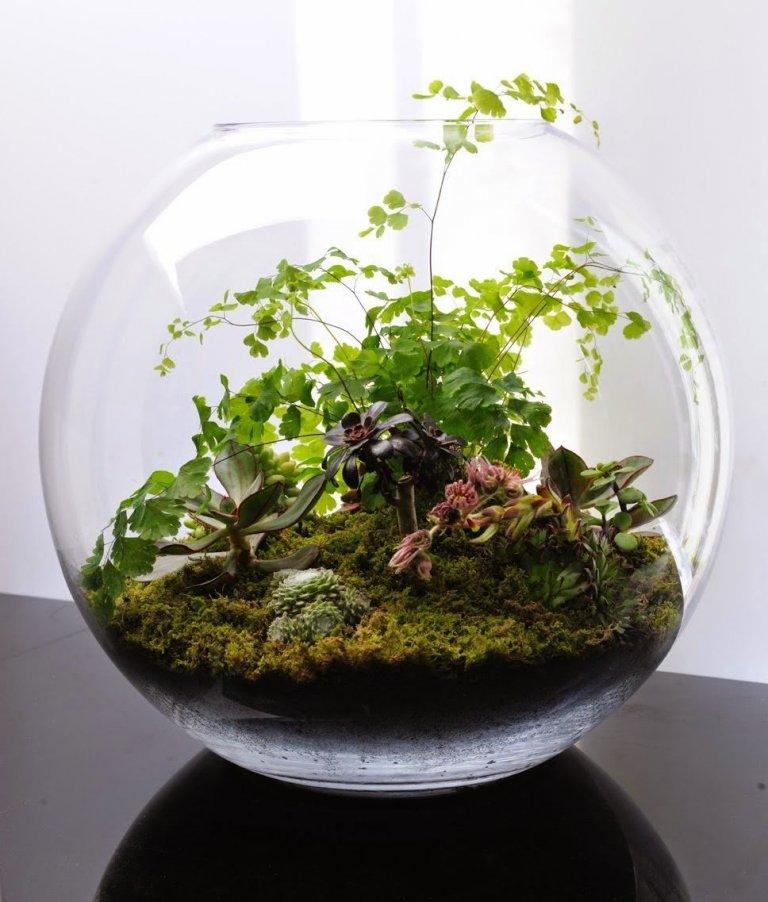 Ne všichni máme doma prostorné parapety, nebo dostatečně velká místa pro květiny v květináči nebo váze. Existuje ovšem způsob, jak si doma pěstovat zahrádku, která nebude náročná na prostor, ani údržbu. Stačí k ní mít pouze skleněnou láhev nebo nádobu, do které si zasadíte oblíbenou rostlinku a bude vám dělat radost i přes to, že ji občas zapomete zalít.