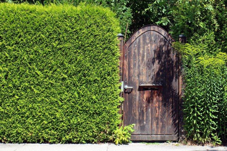 Jaké dřeviny jsou vhodné na rychle rostoucí živý plot