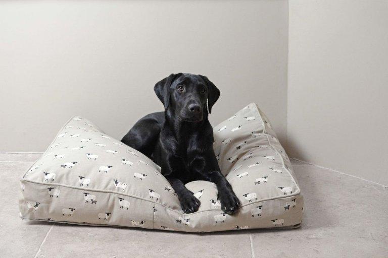 Psi s ortopedickými problémy by měli dostat matraci z paměťové pěny