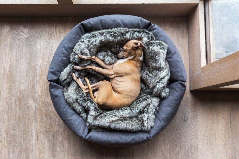 Někteří pejskové dávají přednost spánku v klubíčku