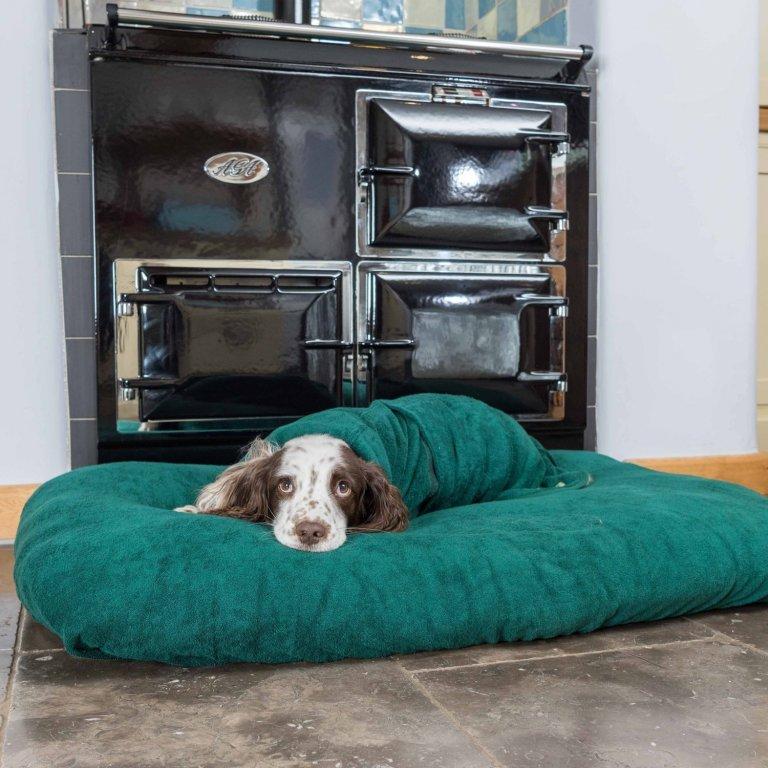 V chladných dnech ocení pejsek deku.