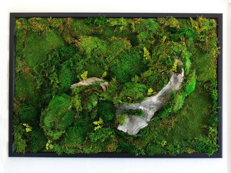 Obrazy z mumifikovaného mechu jsou výjimečný interiérový prvek