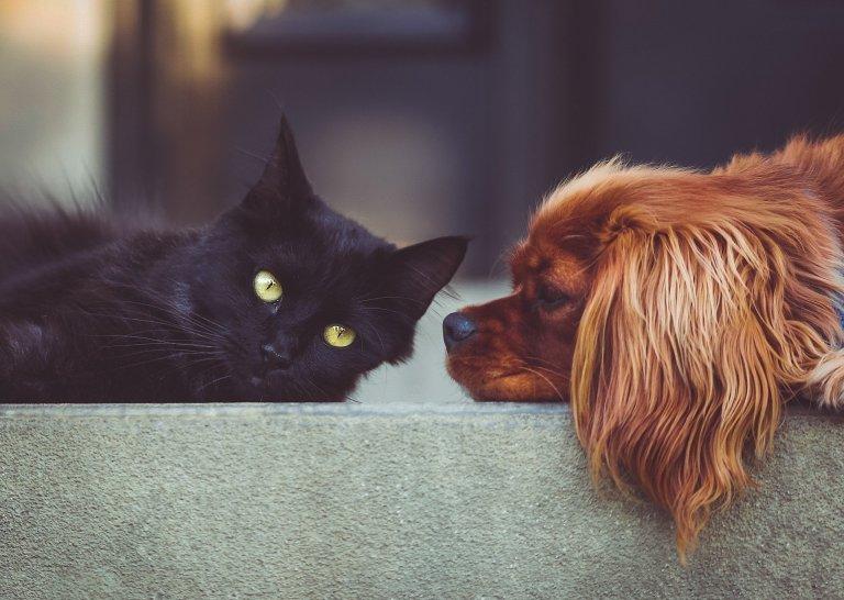 Psí chlupy a kočičí zápach? Jak s nimi zatočit?